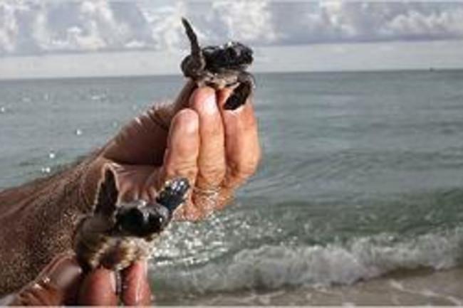 turtles600.jpg