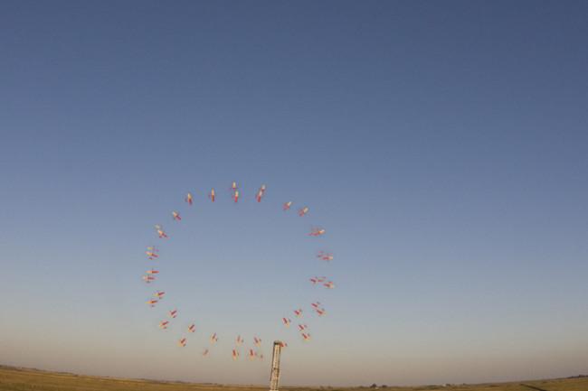 bigcircles_wingcrop.jpg