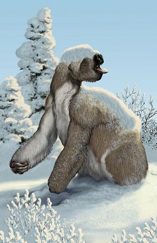 sloth-buell.jpg