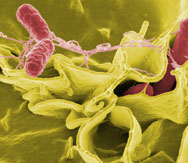 20 Things You Didn't Know About... Bacteria