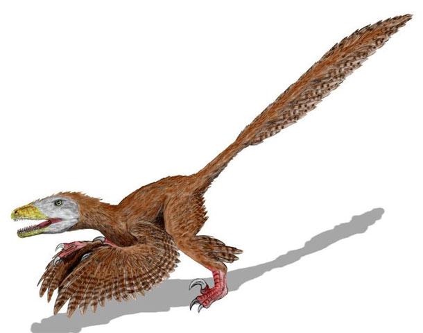 Deinonychus_restoration.jpg