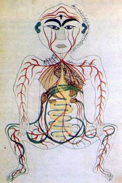 17th Century Digestive System - Nasr 1976