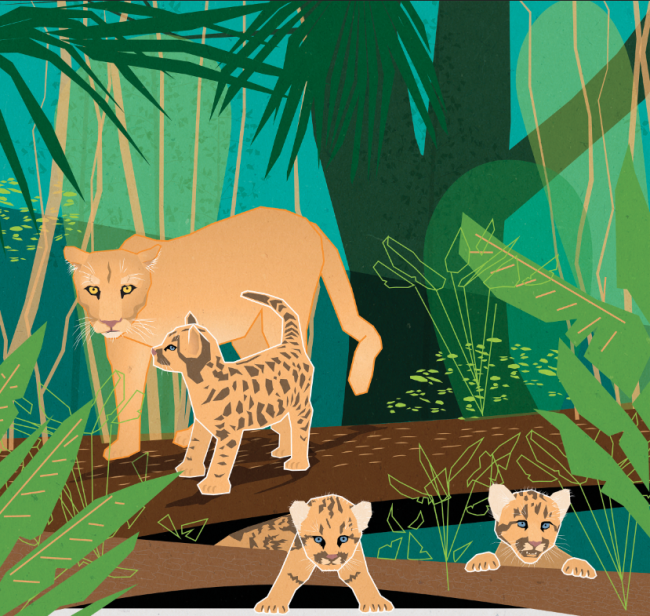 Florida Panther Art - Kellie Jaeger