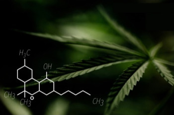 The 'Father of Cannabis Research' on the Untapped Potential of Marijuana as Medicine