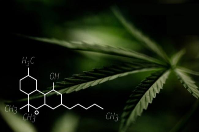 marijuana cbd - Shutterstock