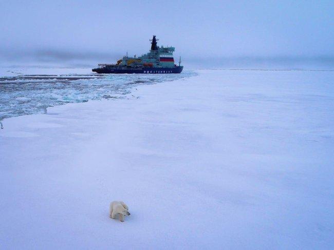 Arktika and Polar Bear