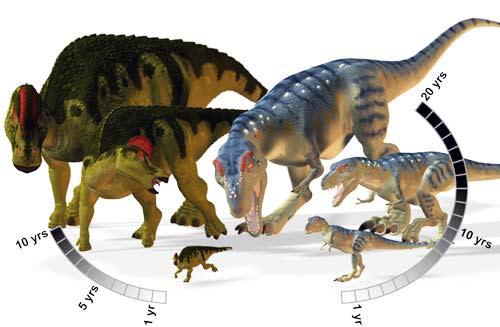 HypacrosaurusAlbertasaurus.jpg