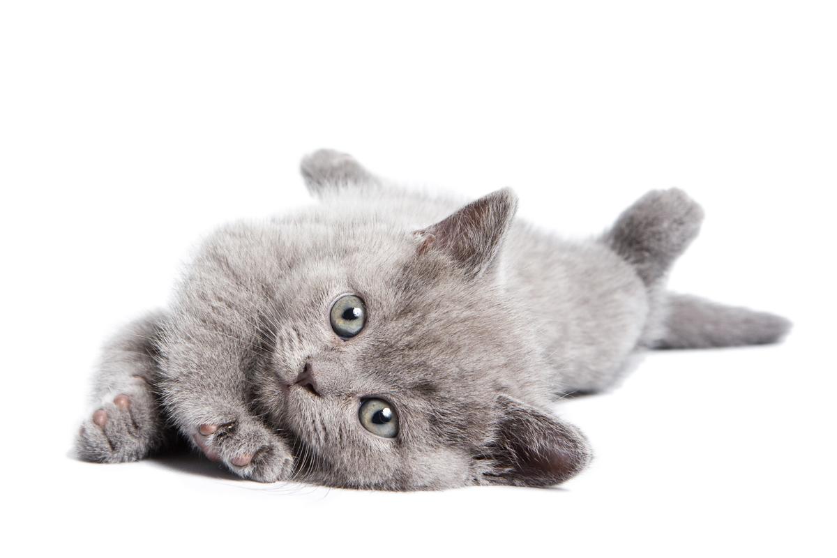 Cute Kitten - Shutterstock