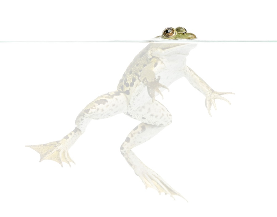 Keeping Milk Fresh — With Frogs