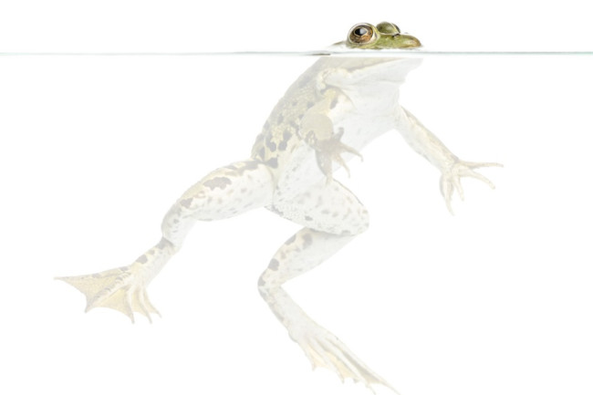 frog-milk