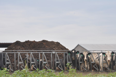Turning Cow Poop Into Energy Sounds Like a Good Idea — But Not Everyone Is on Board