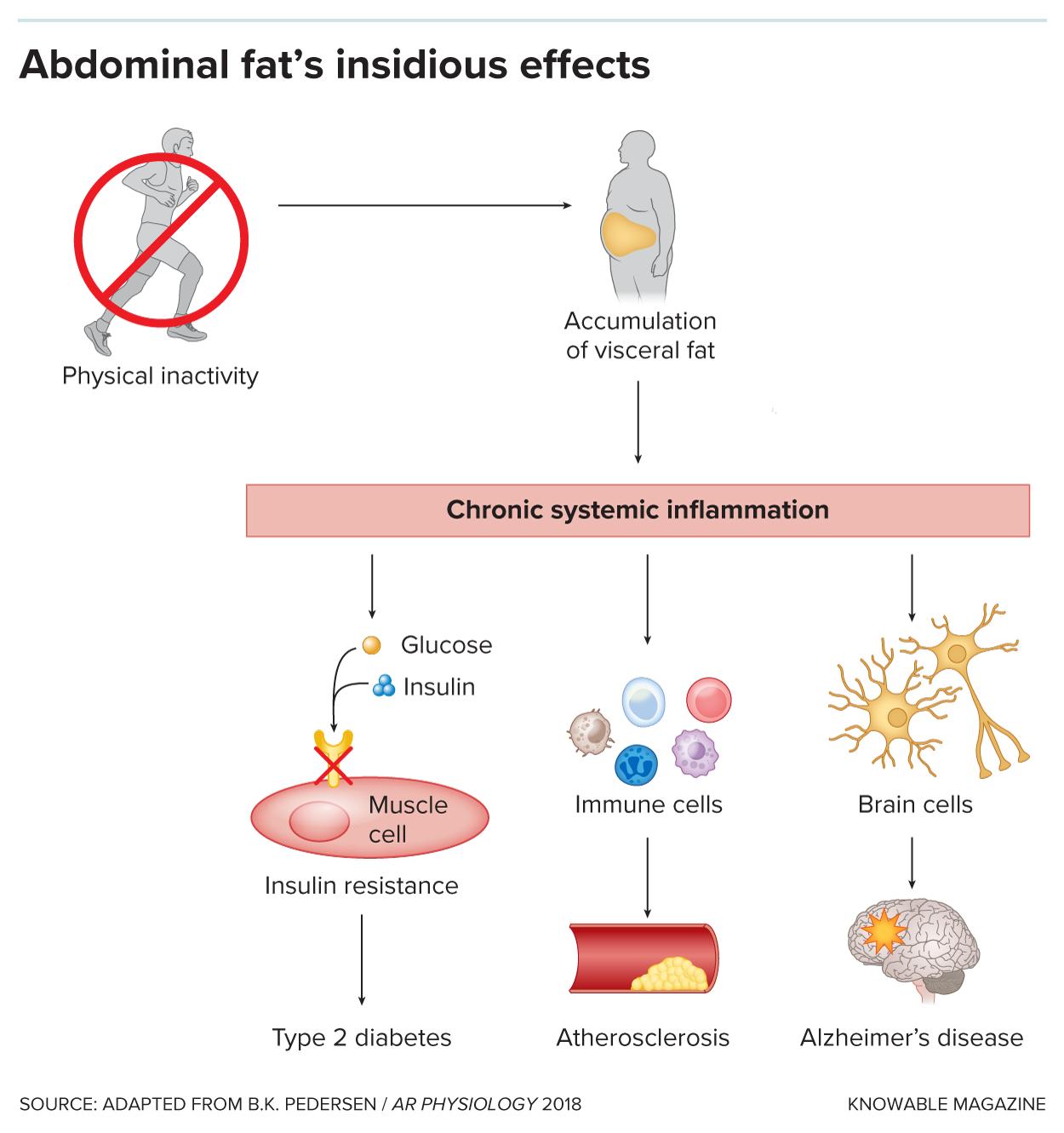 G-abdominal-gordura-alt