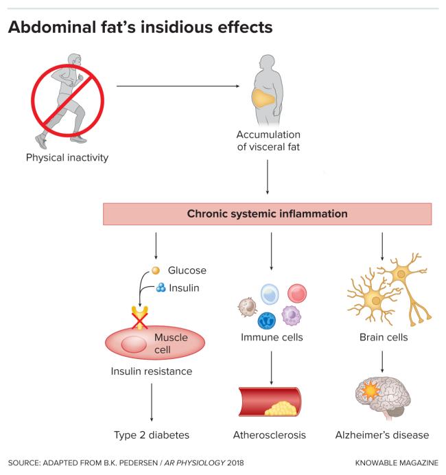 G-abdominal-fat-alt