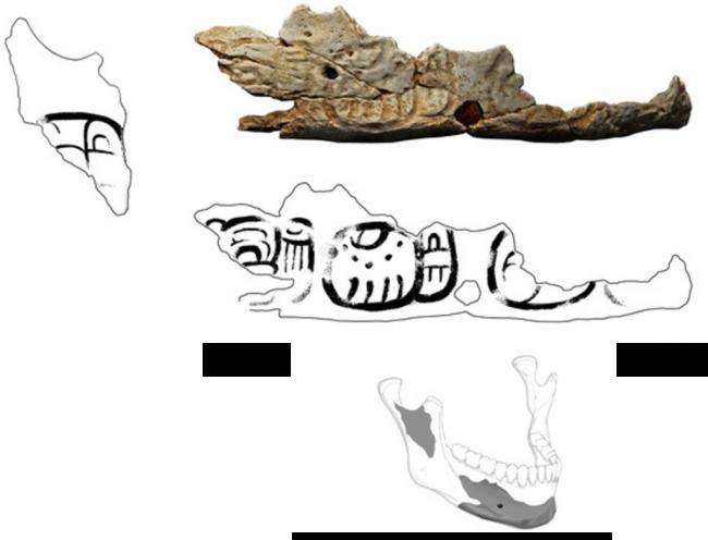 Pacbitun Trophy Skull - CCBY