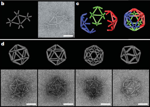 DNA-origami-icosahedron.jpg