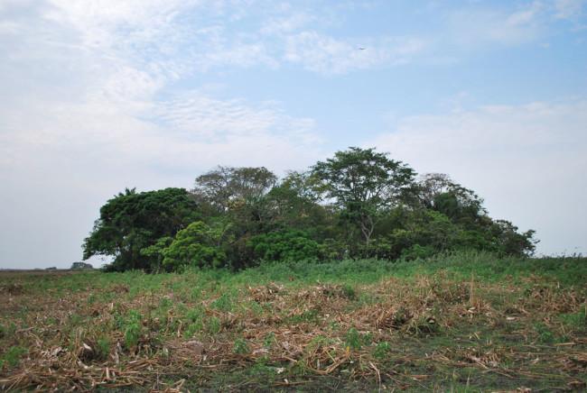 SouthAmericanIslandForests002.jpg