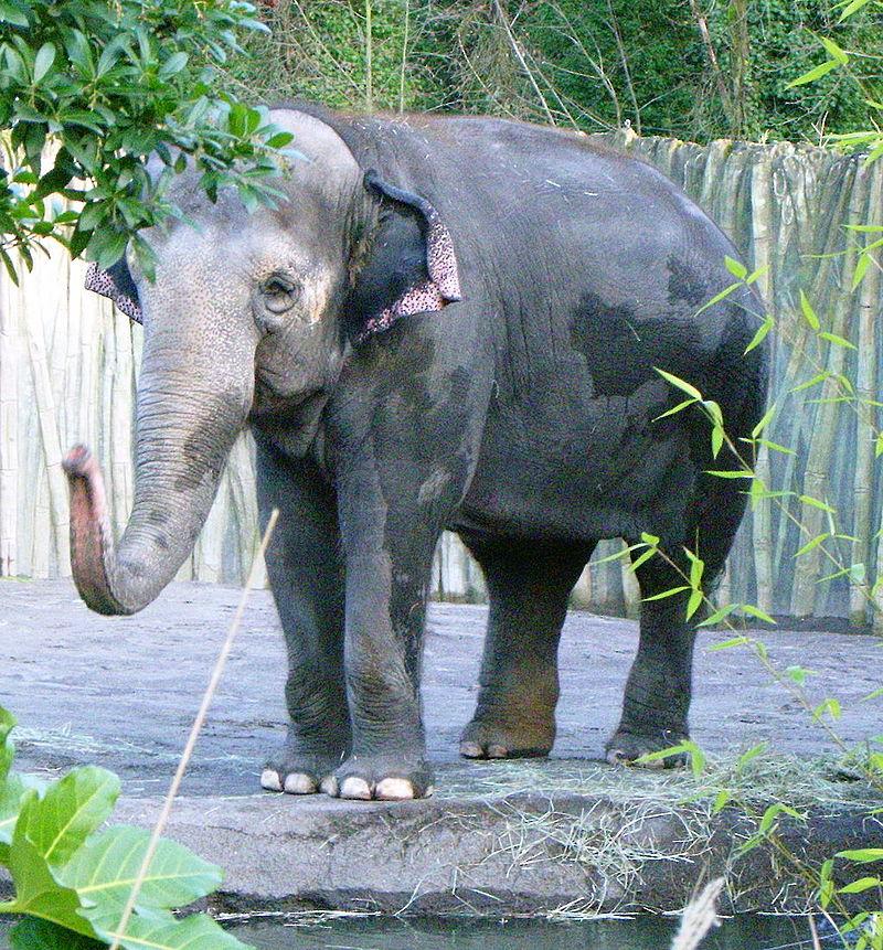 Oregon_zoo_elephant_P1537.jpeg-1.jpeg