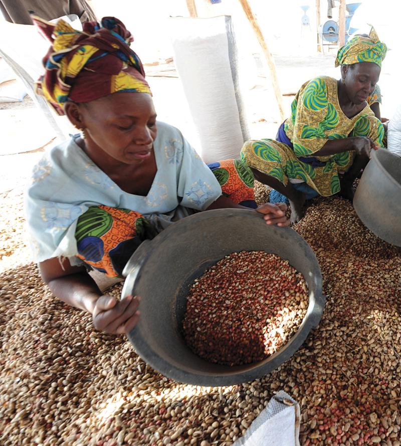 peanut farmer sort