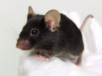 singing-mouse.jpg