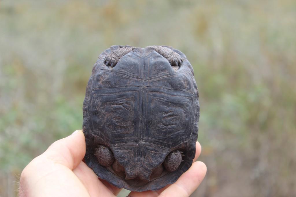 baby-tortoise-1024x682.jpg