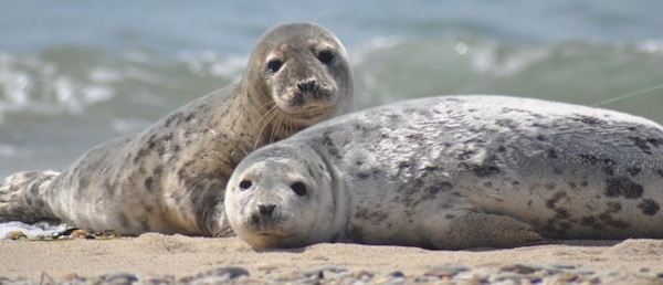 Nantucket-seals-6001.jpg