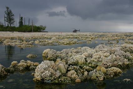 coral-sumatra.jpg