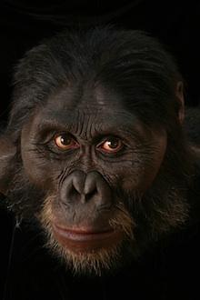 australopithecus_afarensis2201.jpg