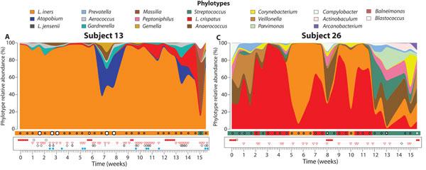phylotype.jpg