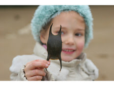 Shark Eggcase Hunt