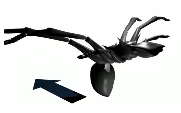 Gliding_ant.jpg