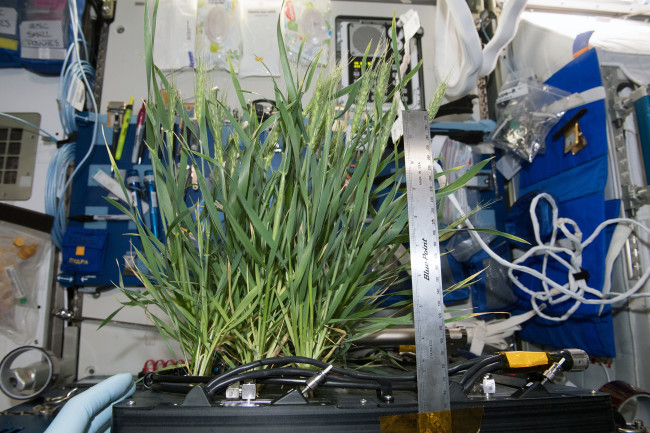 ISS Advanced Plant Habitat - NASA