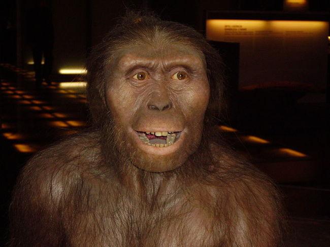 800px-Australopithecus_afarensis-1.jpg