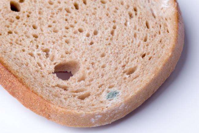 Moldy Bread - Shutterstock