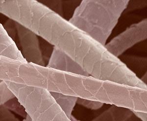 wool-microscopic