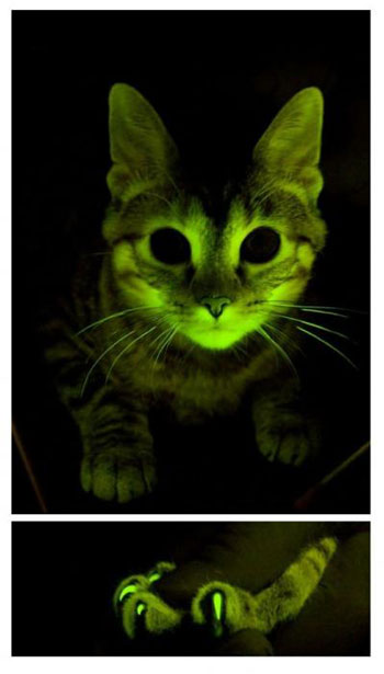 green-cat.jpg