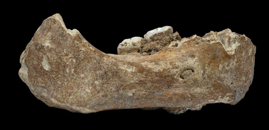 Denisovan jawbone