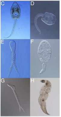 frog-parasites.jpg