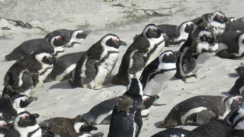 Penguin_beach.jpg