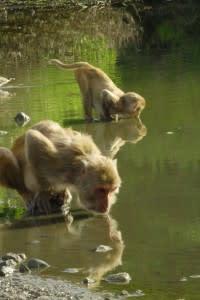 monkey-200x300.jpeg