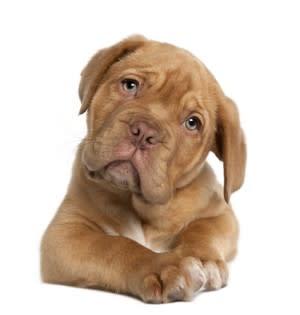 sad-puppy-e1334333366936.jpg