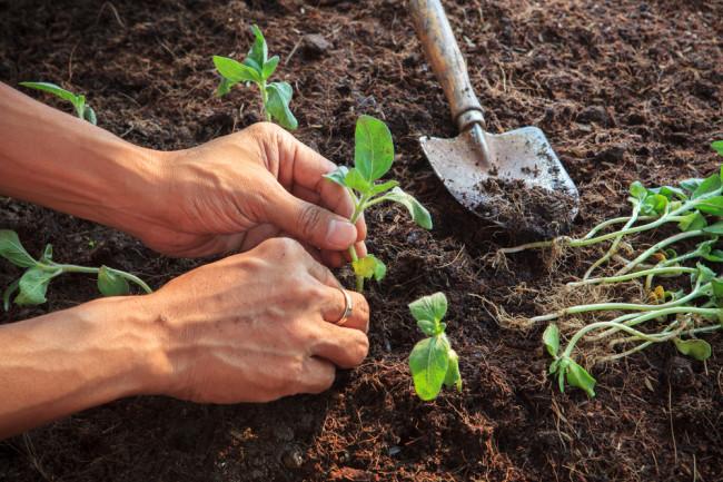 gardening - shutterstock