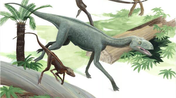 Dinosauromorph.jpg