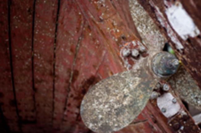 ship-barnacles.jpg
