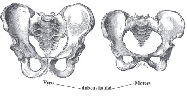 pelvis gender difference