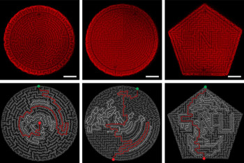 Self-Wrinkling Mini-Mazes Could Serve as Cybersecurity Moats