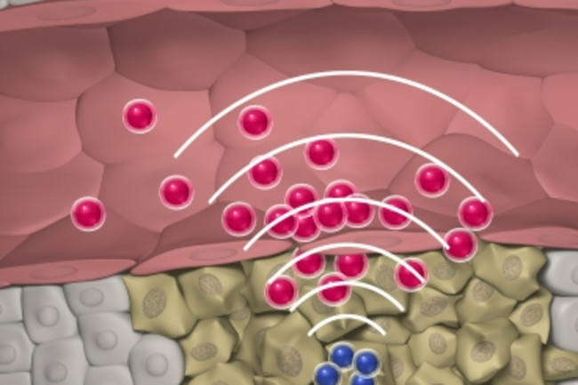 nanoparticles.jpg
