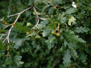 treezilla-300x226.jpg