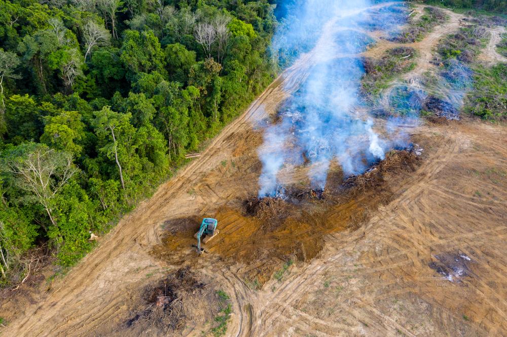 Rainforest Deforestation - Shutterstock