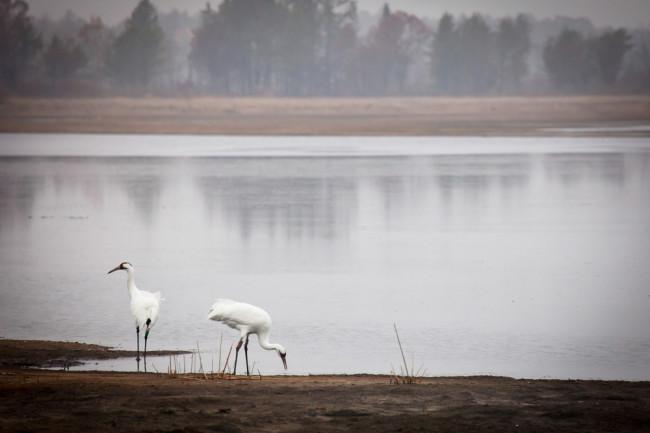 migratingbirdsenvironment.jpg