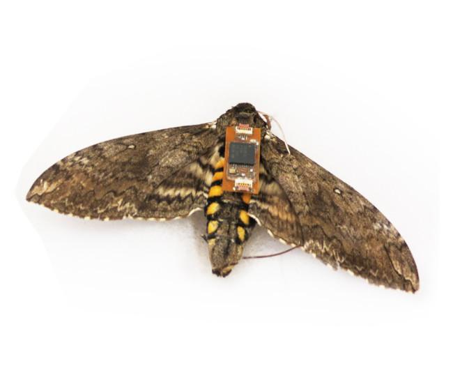 Moth Robot Backpack - Michael Tomsic - DSC-BI0416_01.jpg